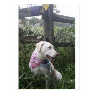 Kali Dog Postcard