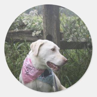 Kali Dog Round Sticker