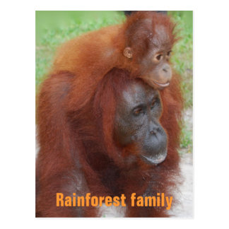 Kalimantan Indonesia Rainforest Family Postcards