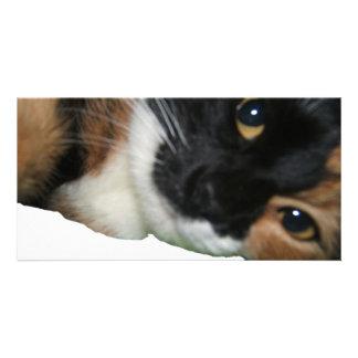 Kalua a photo greeting card