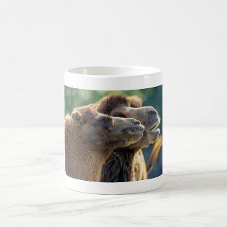 Kamelpaar Kopfporträt Nahaufnahme Kaffeehaferl