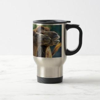 Kamelpaar Kopfporträt Nahaufnahme Tee Haferl