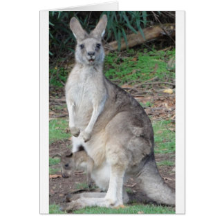Kangaroo and Joey Card