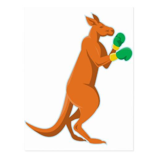 kangaroo boxer boxing retro postcards