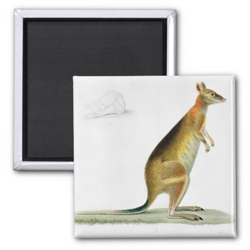 Kangaroo, engraved by Coutant Refrigerator Magnet