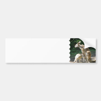 Kangaroo Joey  Bumper Sticker