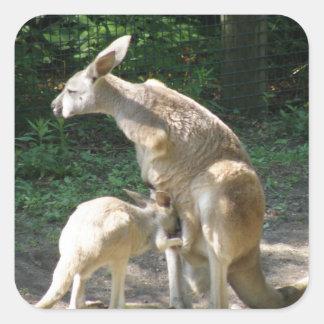 Kangaroo Joey  Stickers