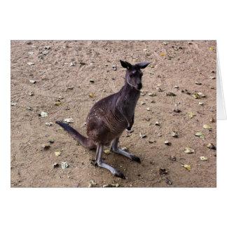 Kangaroo Looking at the Camera Card