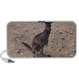 Kangaroo Looking at the Camera Notebook Speakers