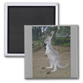 Kangaroo Square Magnet