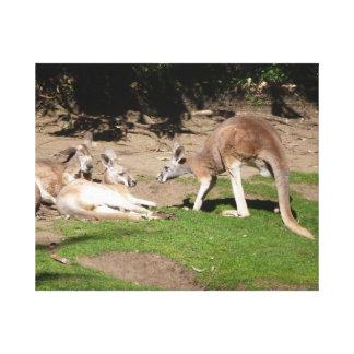 Kangaroo mob stretched canvas prints