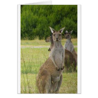 Kangaroo Paddock Card