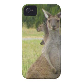 Kangaroo Paddock iPhone 4 Case-Mate Cases