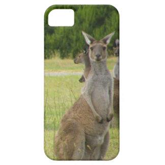 Kangaroo Paddock iPhone 5 Covers