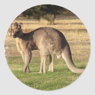 Kangaroo Picture Sticker
