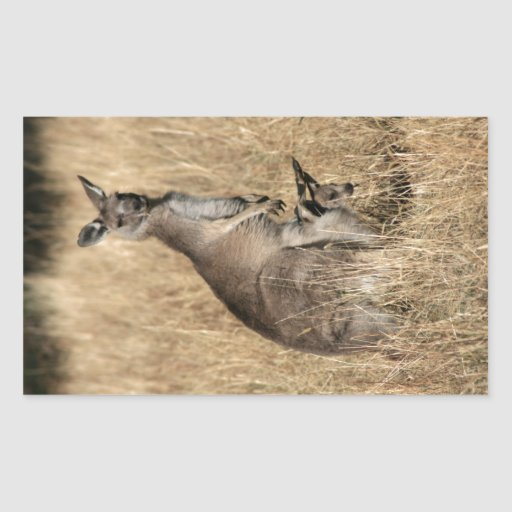 Kangaroo with Baby Joey in Pouch Rectangular Sticker