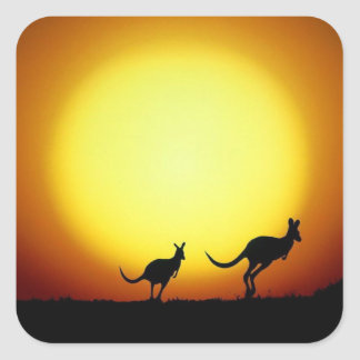 Kangaroos in the Australian Outback Square Sticker