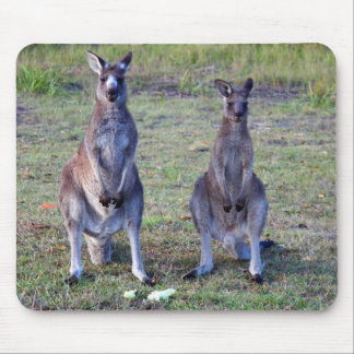 Kangaroos Mouse Mat