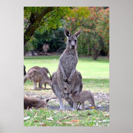 Kangaroos mummy poster