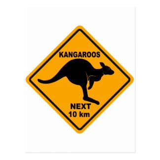 Kangaroos Next 10 km Postcard