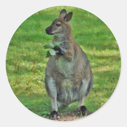 Kangaroos with oaks leaves stickers