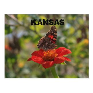 Kansas Butterfly Post Card