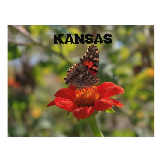 Kansas Butterfly Post Card