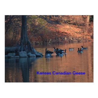 Kansas Canadian Geese Postcard