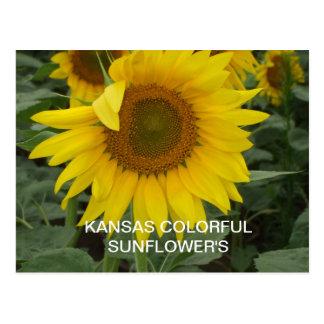 KANSAS COLORFUL  SUNFLOWER'S  POST CARD