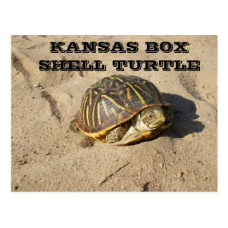 Kansas Country Box Shell Turtle Post Card