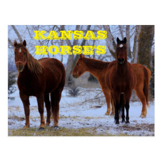 Kansas Country Horse's Post Card