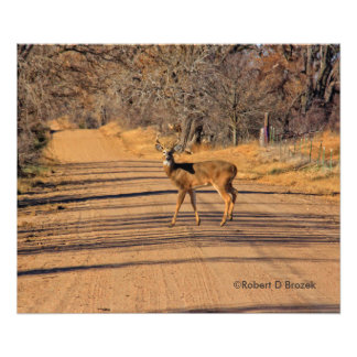 Kansas Deer in the Road Photographic Print