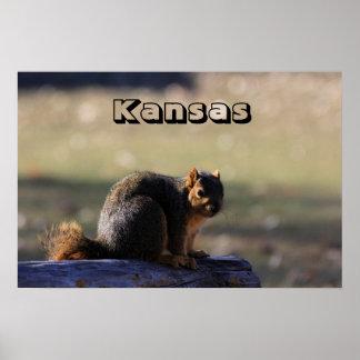 Kansas Fox Tail Squirrel Poster