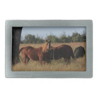 Kansas Horses Square Belt Buckle