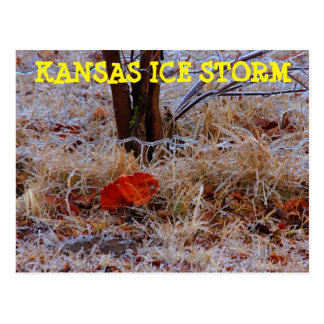 Kansas Ice Storm with a leaf Post Card
