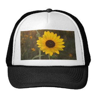 Kansas Sunflower Cap