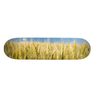 Kansas Wheat 21.3 Cm Mini Skateboard Deck