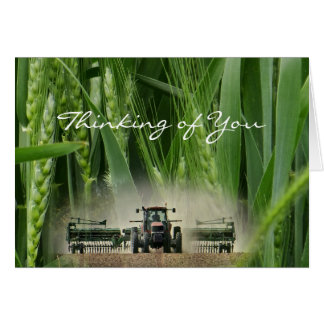Kansas Wheat 2862 3-2- customize any occasion Card