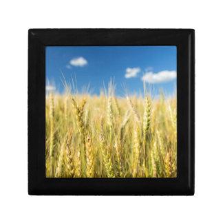 Kansas Wheat Gift Box