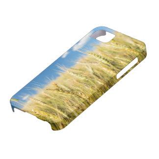 Kansas Wheat iPhone 5 Case