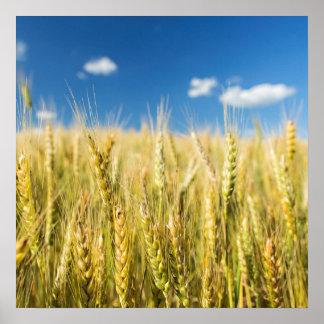 Kansas Wheat Poster