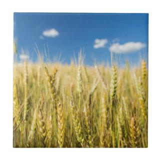 Kansas Wheat Small Square Tile
