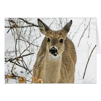 Kansas White Tail Deer in Snow Greeting Cards