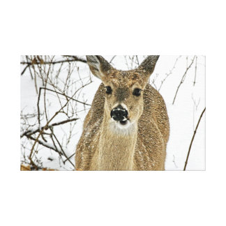 Kansas White Tail Deer Stretched Canvas Print