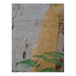 Karri tree bark and fern leaf postcard