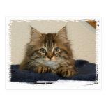 Katze Asha 2 Postkarte