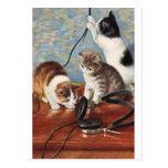 Katze Vintage Postcard