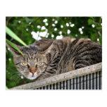 Katze wird böse postcard