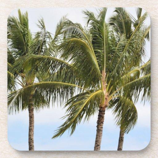 Kauai Palm trees Beverage Coasters