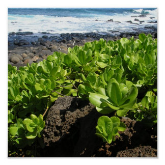Kauai succulents 1 poster
